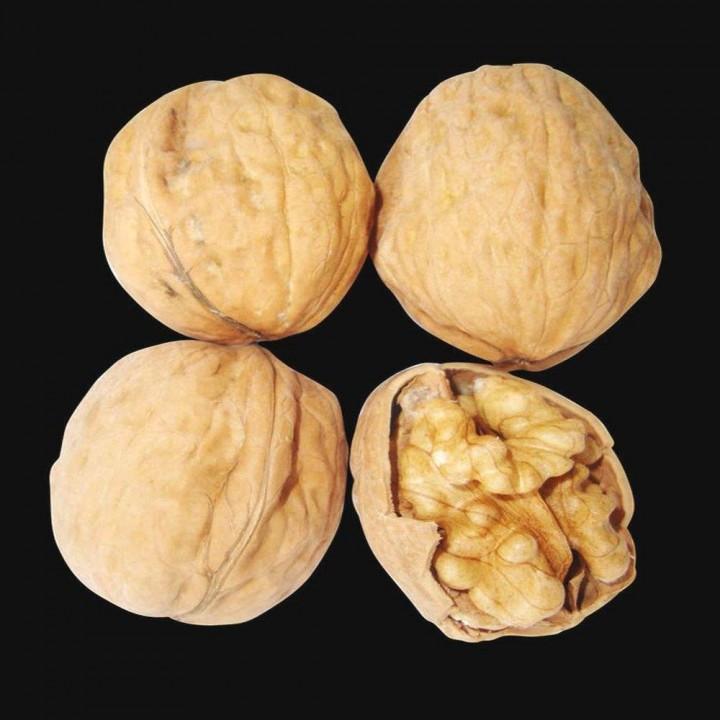 Franquette сорт грецкого ореха