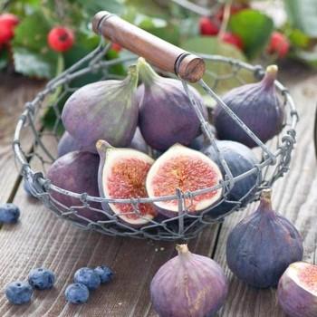Саженцы инжира Виолетта в Батайске